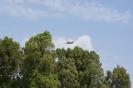 Flying Pantegana